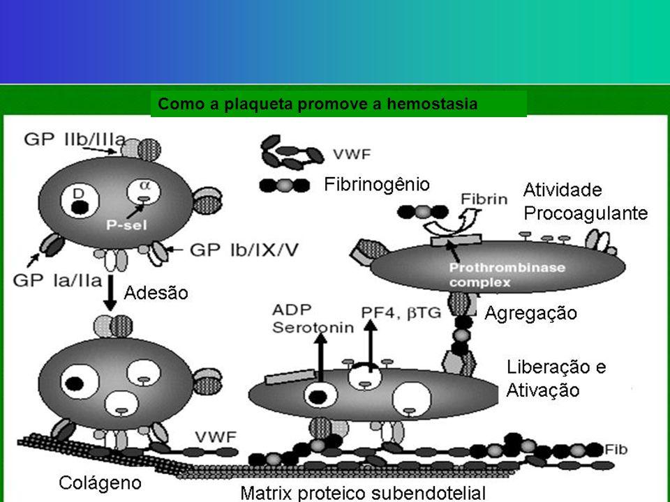 Como a plaqueta promove a hemostasia