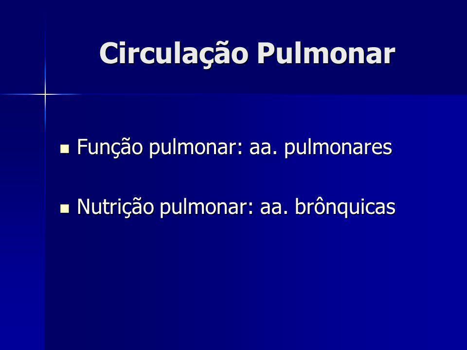 Circulação Pulmonar Função pulmonar: aa. pulmonares Função pulmonar: aa. pulmonares Nutrição pulmonar: aa. brônquicas Nutrição pulmonar: aa. brônquica