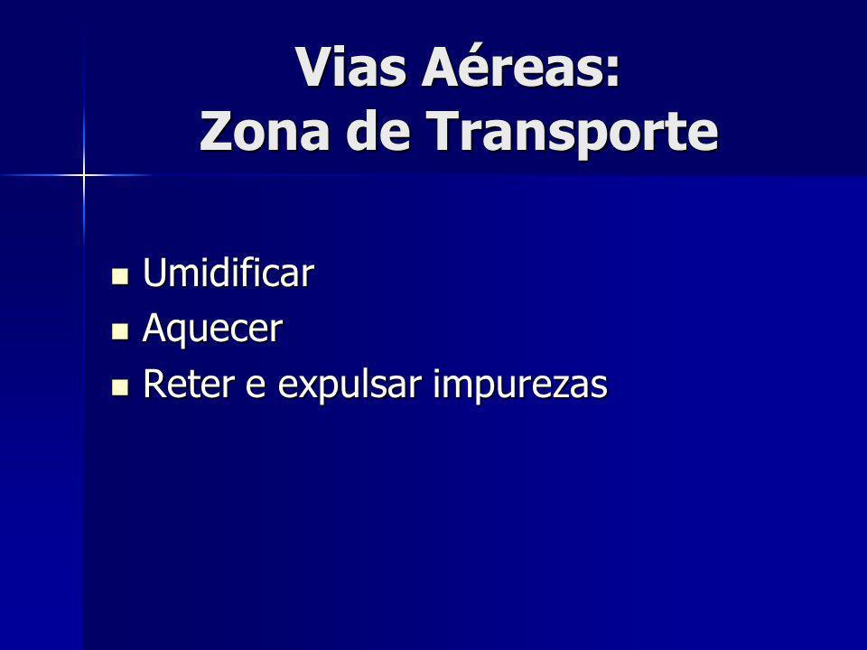 Vias Aéreas: Zona de Transporte Umidificar Umidificar Aquecer Aquecer Reter e expulsar impurezas Reter e expulsar impurezas