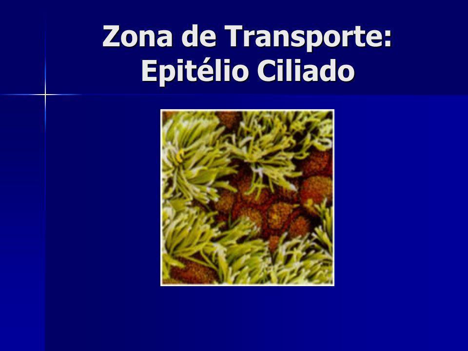 Zona de Transporte: Epitélio Ciliado