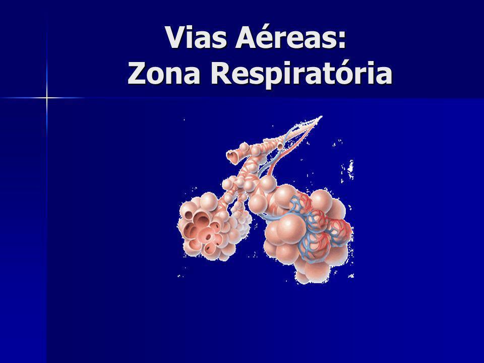 Vias Aéreas: Zona Respiratória