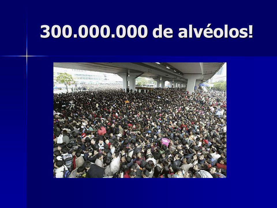 300.000.000 de alvéolos!