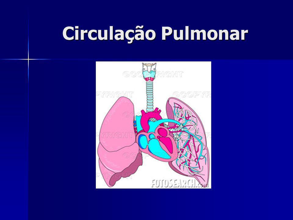 Alvéolos pneumócitos tipo I: - poucos organelas - não regeneram pneumócitos tipo II: - capacidade mitótica - produção do surfactante