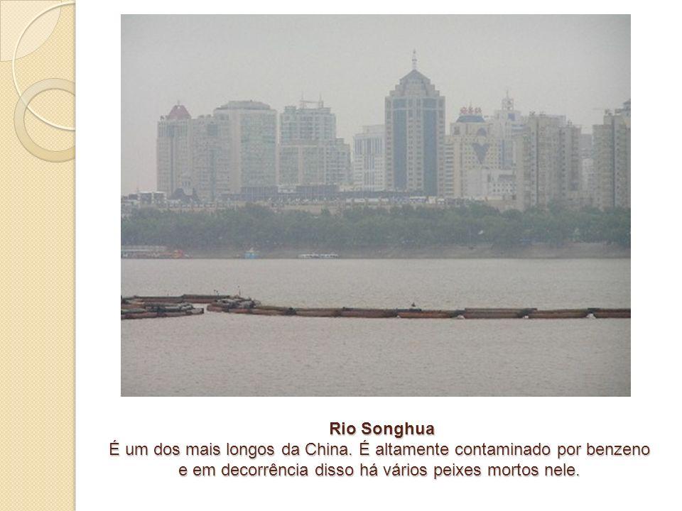 Rio Songhua É um dos mais longos da China. É altamente contaminado por benzeno e em decorrência disso há vários peixes mortos nele. Rio Songhua É um d