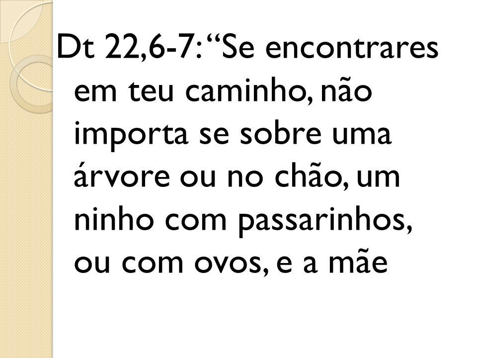 Dt 22,6-7: Se encontrares em teu caminho, não importa se sobre uma árvore ou no chão, um ninho com passarinhos, ou com ovos, e a mãe