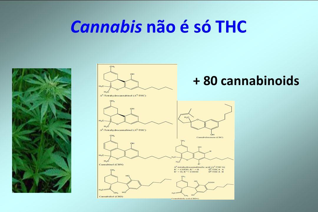 Cannabis não é só THC + 80 cannabinoids