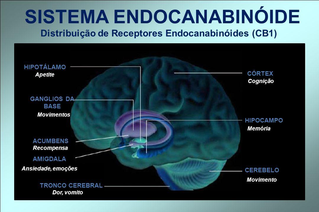 Distribuição de Receptores Endocanabinóides (CB1) SISTEMA ENDOCANABINÓIDE HIPOTÁLAMO CÓRTEX GANGLIOS DA BASE ACUMBENS AMIGDALA TRONCO CEREBRAL HIPOCAM