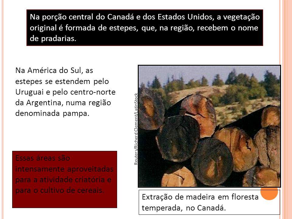 Na América do Sul, as estepes se estendem pelo Uruguai e pelo centro-norte da Argentina, numa região denominada pampa. Extração de madeira em floresta