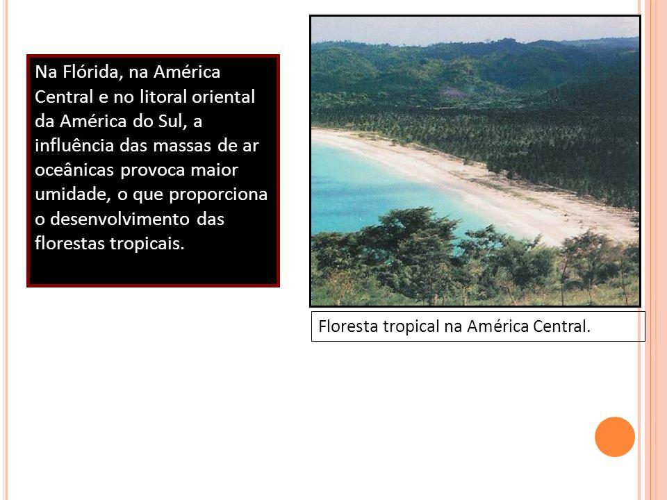 Na Flórida, na América Central e no litoral oriental da América do Sul, a influência das massas de ar oceânicas provoca maior umidade, o que proporcio