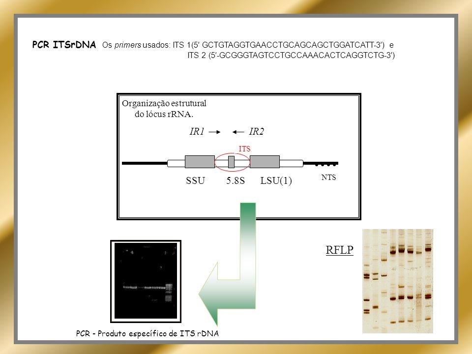 Classificação e relação filogenética FIOCRUZ