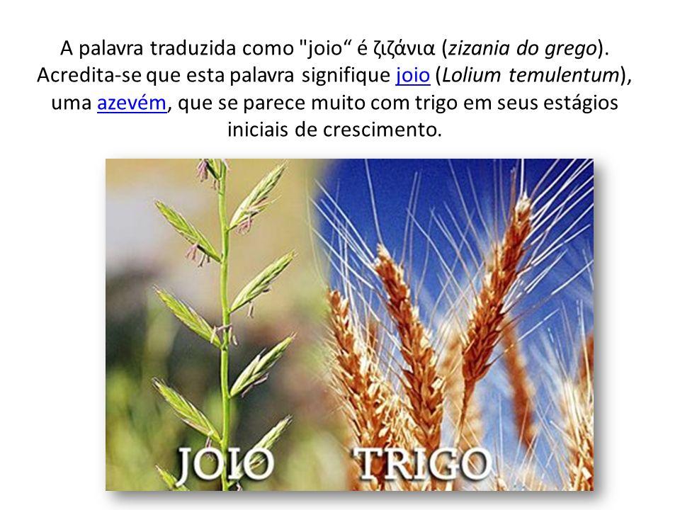 É bastante difícil separar o joio do trigo, pois são muito parecidos.