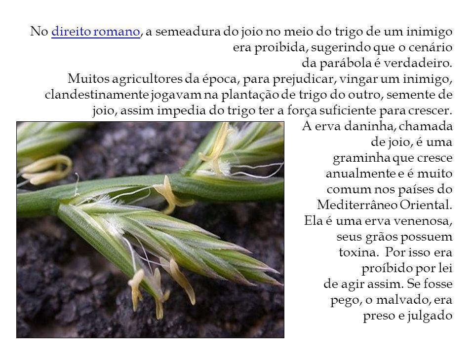 No direito romano, a semeadura do joio no meio do trigo de um inimigo era proibida, sugerindo que o cenáriodireito romano da parábola é verdadeiro. Mu