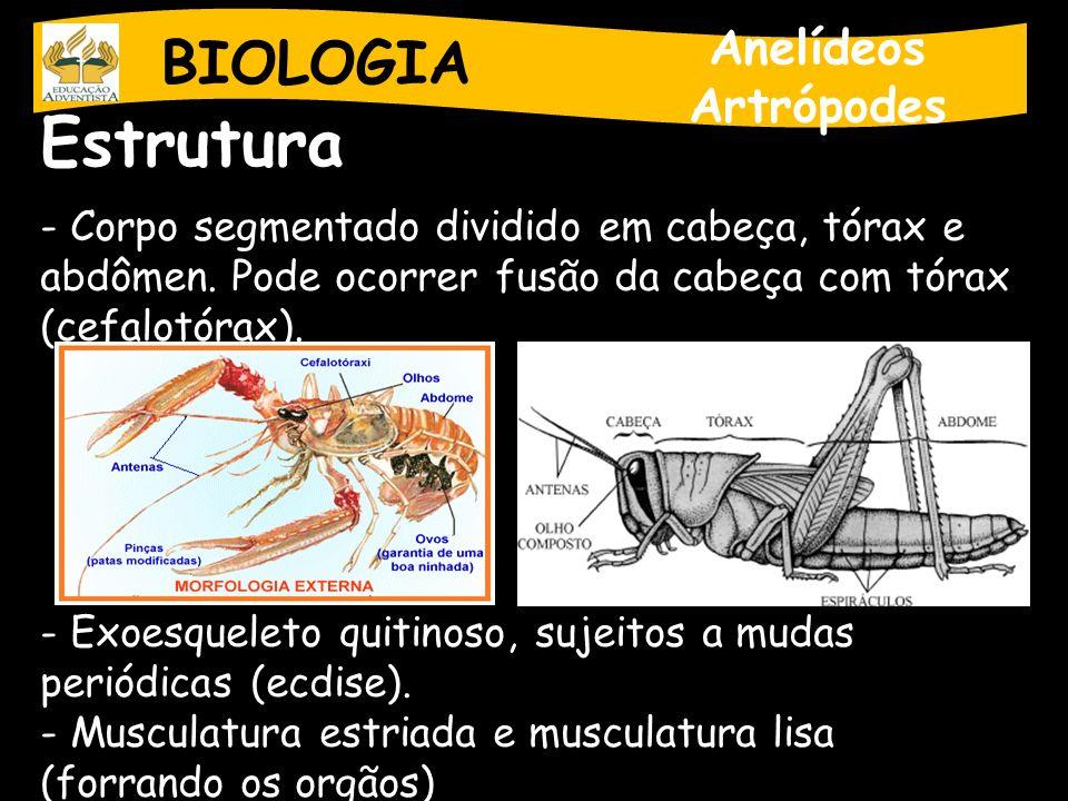 BIOLOGIA Anelídeos Artrópodes Estrutura - Corpo segmentado dividido em cabeça, tórax e abdômen. Pode ocorrer fusão da cabeça com tórax (cefalotórax).