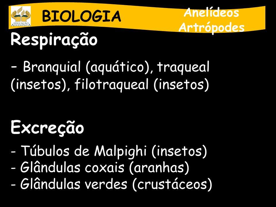 BIOLOGIA Anelídeos Artrópodes Respiração - Branquial (aquático), traqueal (insetos), filotraqueal (insetos) Excreção - Túbulos de Malpighi (insetos) -