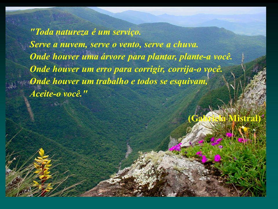 Toda natureza é um serviço. Serve a nuvem, serve o vento, serve a chuva.