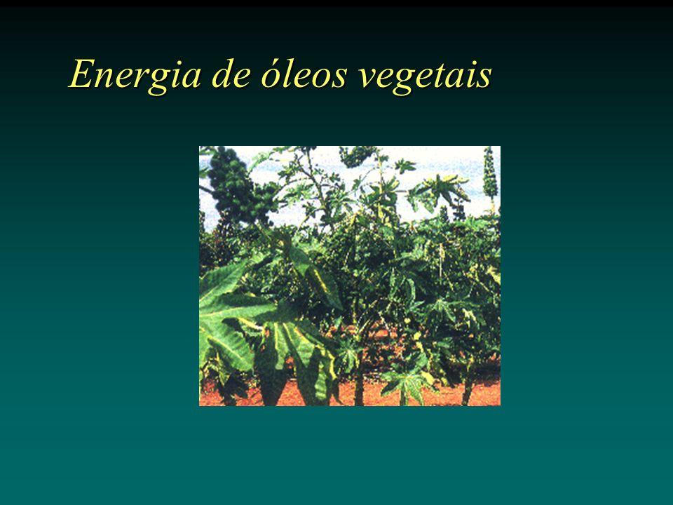 Energia de óleos vegetais