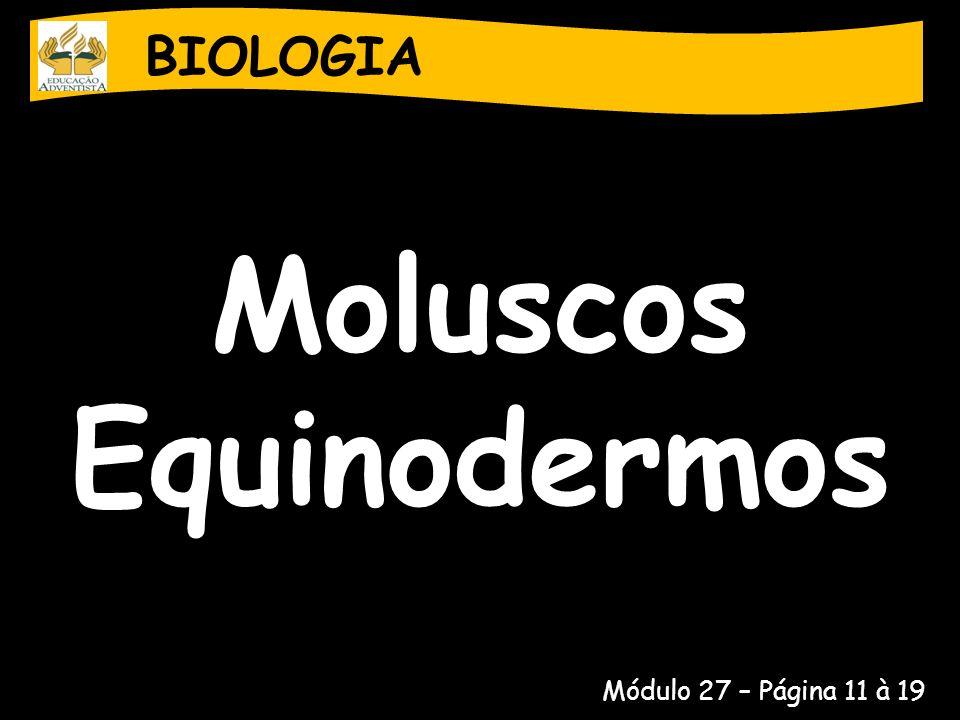 BIOLOGIA Moluscos Equinodermos Sistema Nervoso Um cordão nervoso ao redor da região bucal Sistema circulatório Não há!
