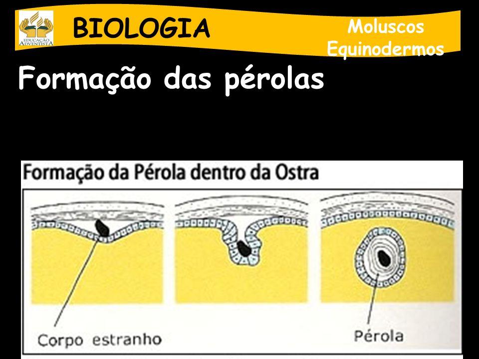 BIOLOGIA Moluscos Equinodermos Formação das pérolas