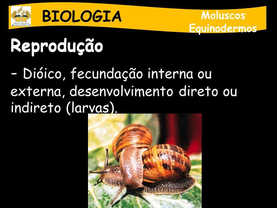 BIOLOGIA Moluscos Equinodermos Reprodução - Dióico, fecundação interna ou externa, desenvolvimento direto ou indireto (larvas).