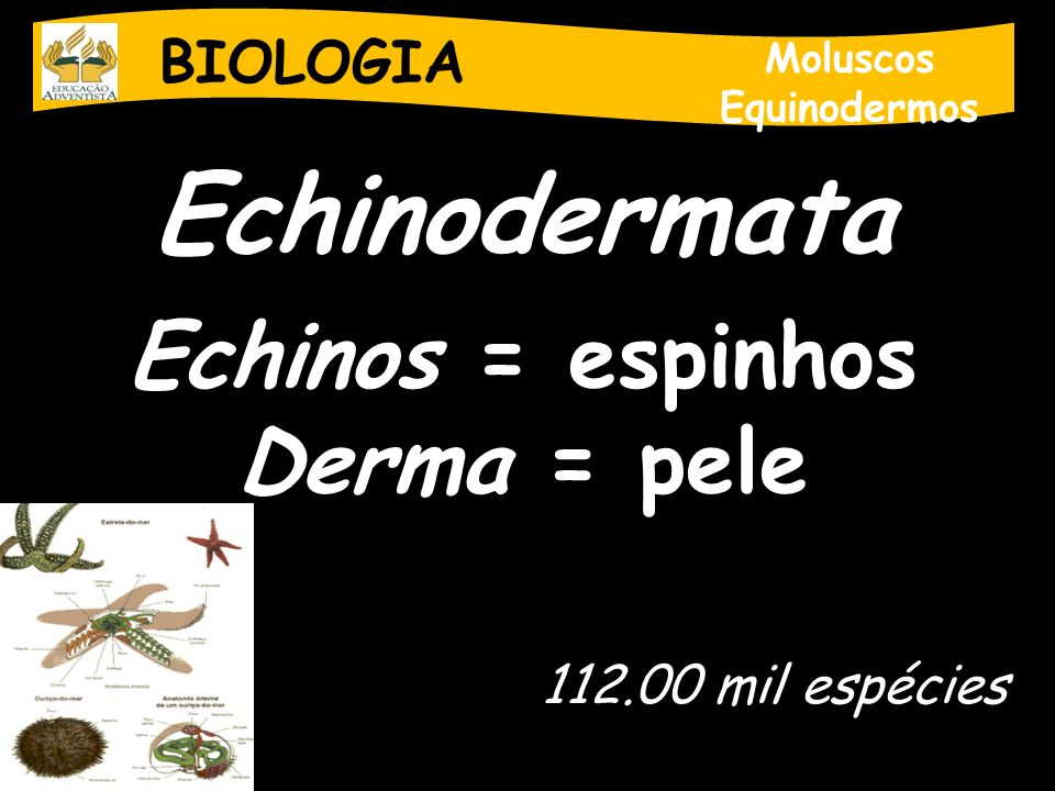 BIOLOGIA Moluscos Equinodermos Echinodermata Echinos = espinhos Derma = pele 112.00 mil espécies