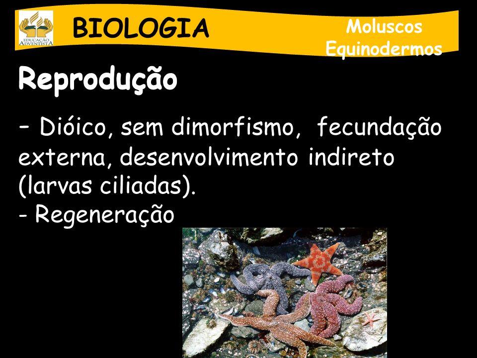 BIOLOGIA Moluscos Equinodermos Reprodução - Dióico, sem dimorfismo, fecundação externa, desenvolvimento indireto (larvas ciliadas). - Regeneração
