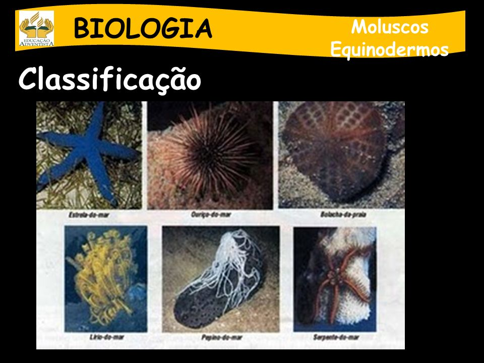 BIOLOGIA Moluscos Equinodermos Classificação