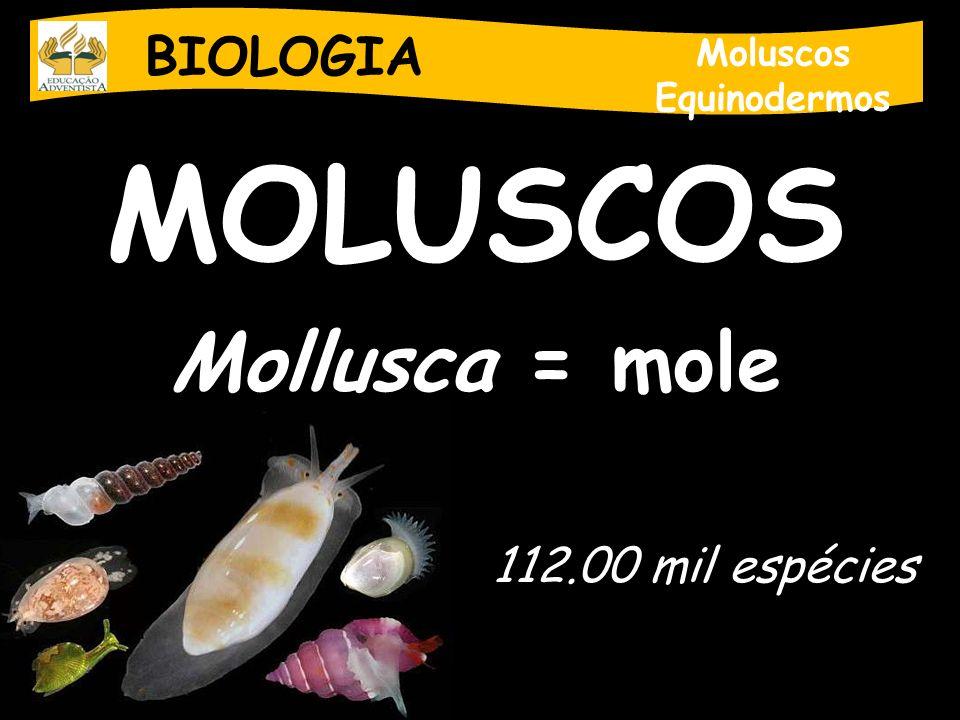 BIOLOGIA Moluscos Equinodermos Reprodução - Dióico, sem dimorfismo, fecundação externa, desenvolvimento indireto (larvas ciliadas).