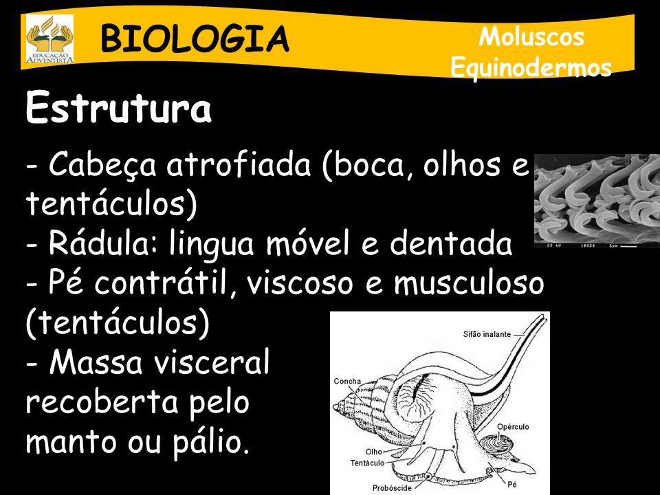 BIOLOGIA Moluscos Equinodermos Estrutura - Cabeça atrofiada (boca, olhos e tentáculos) - Rádula: lingua móvel e dentada - Pé contrátil, viscoso e musc