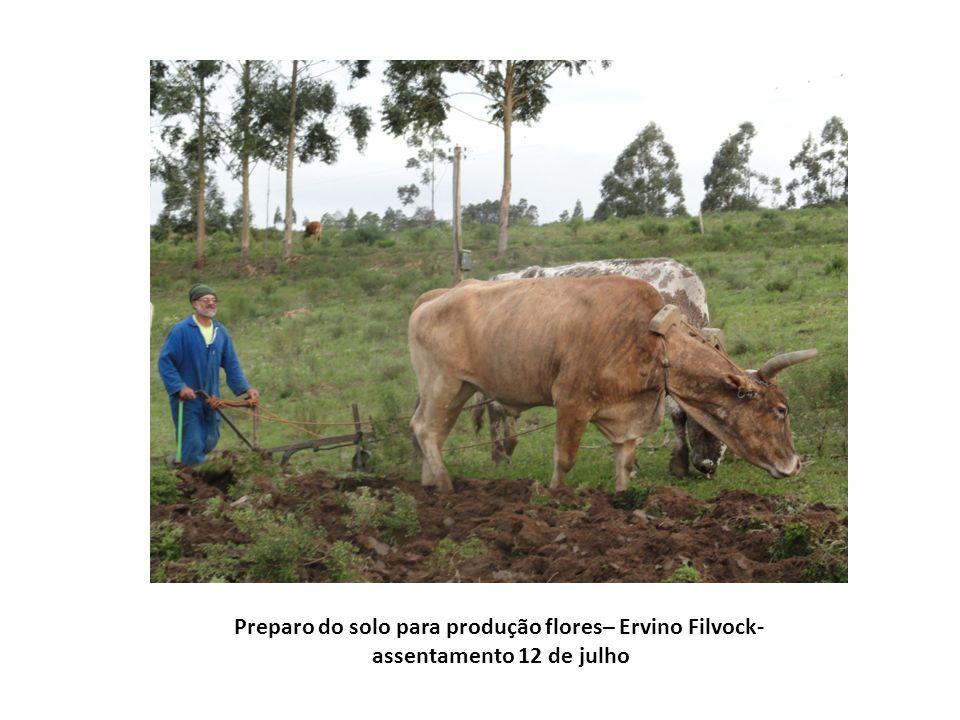 Agricultora Geni Filvock – assentamento 12 de julho – semente de cosméia