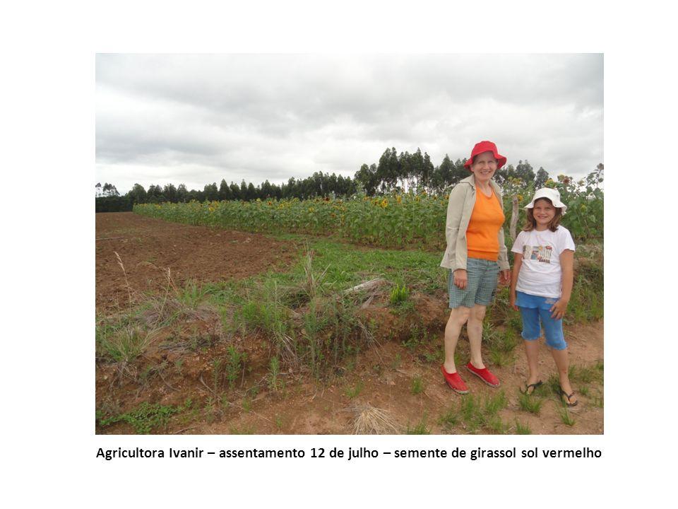 Agricultora Ivanir – assentamento 12 de julho – semente de girassol sol vermelho
