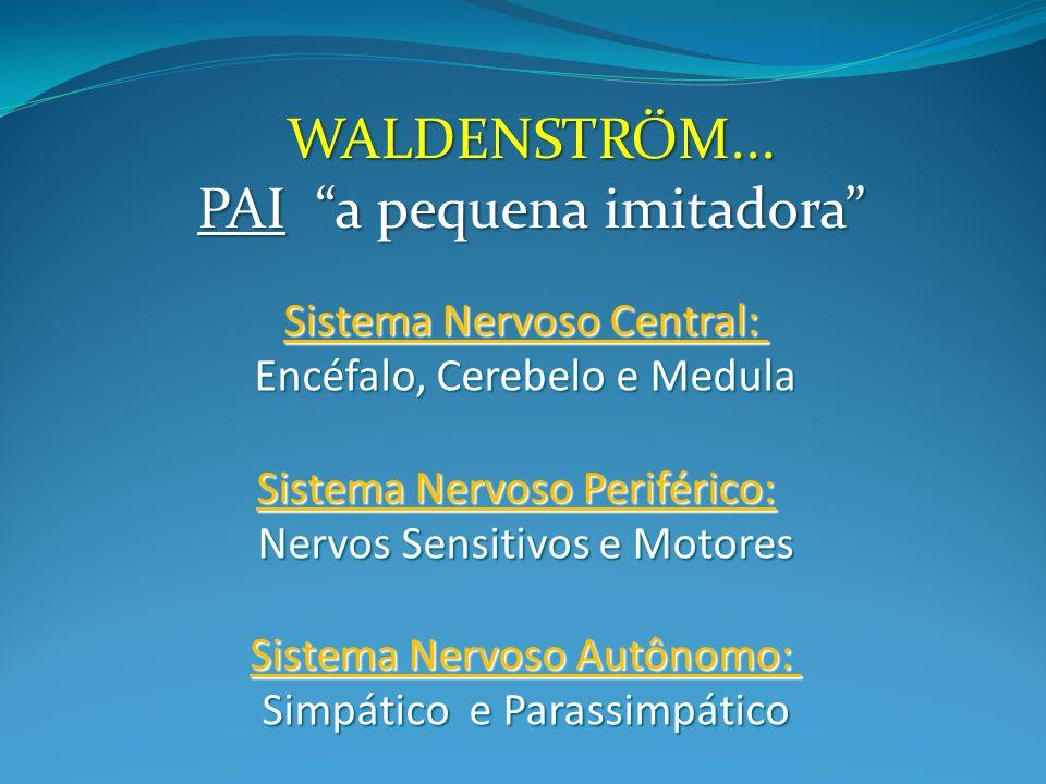 WALDENSTRÖM... PAI a pequena imitadora Sistema Nervoso Central: Encéfalo, Cerebelo e Medula Sistema Nervoso Periférico: Nervos Sensitivos e Motores Si