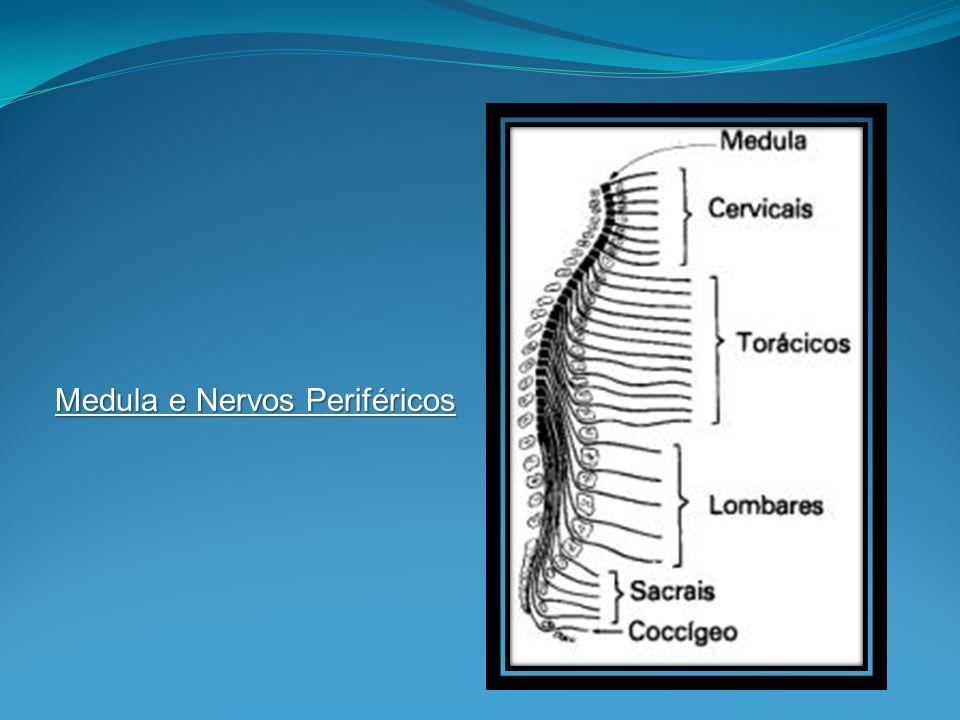 Medula e Nervos Periféricos