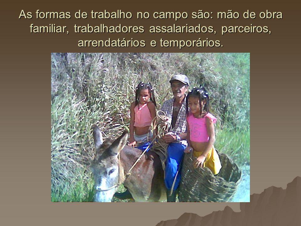 As formas de trabalho no campo são: mão de obra familiar, trabalhadores assalariados, parceiros, arrendatários e temporários.