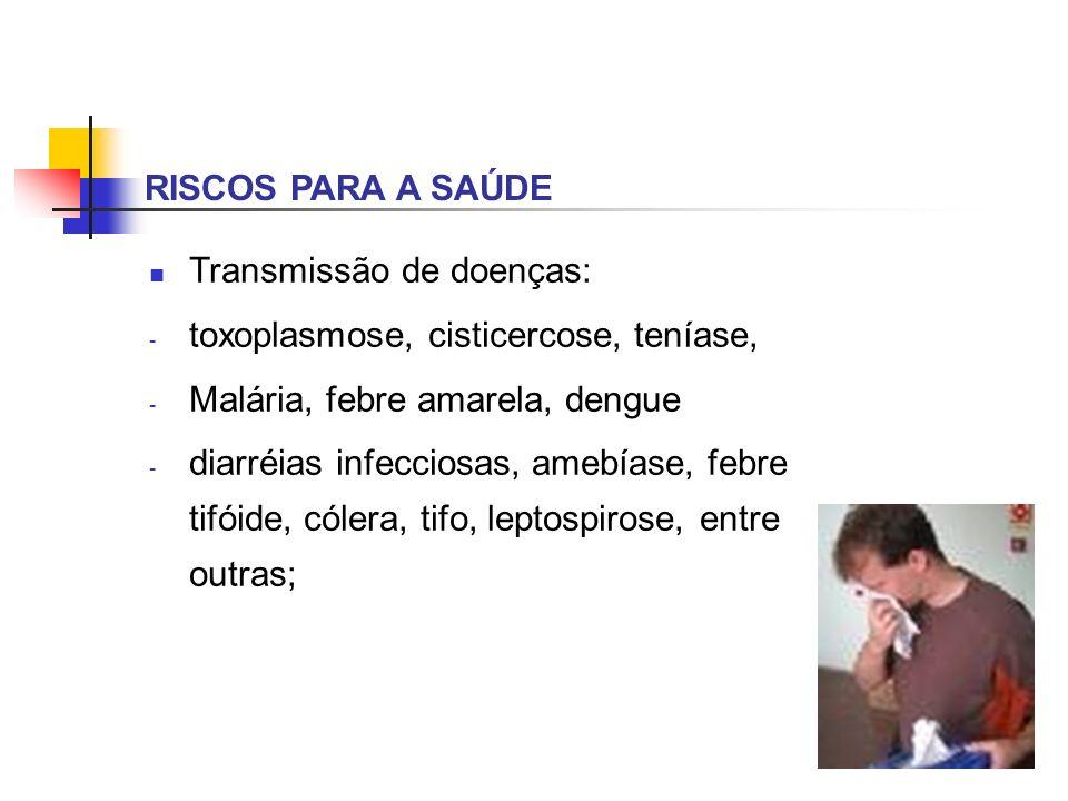 RISCOS PARA A SAÚDE Transmissão de doenças: - toxoplasmose, cisticercose, teníase, - Malária, febre amarela, dengue - diarréias infecciosas, amebíase,