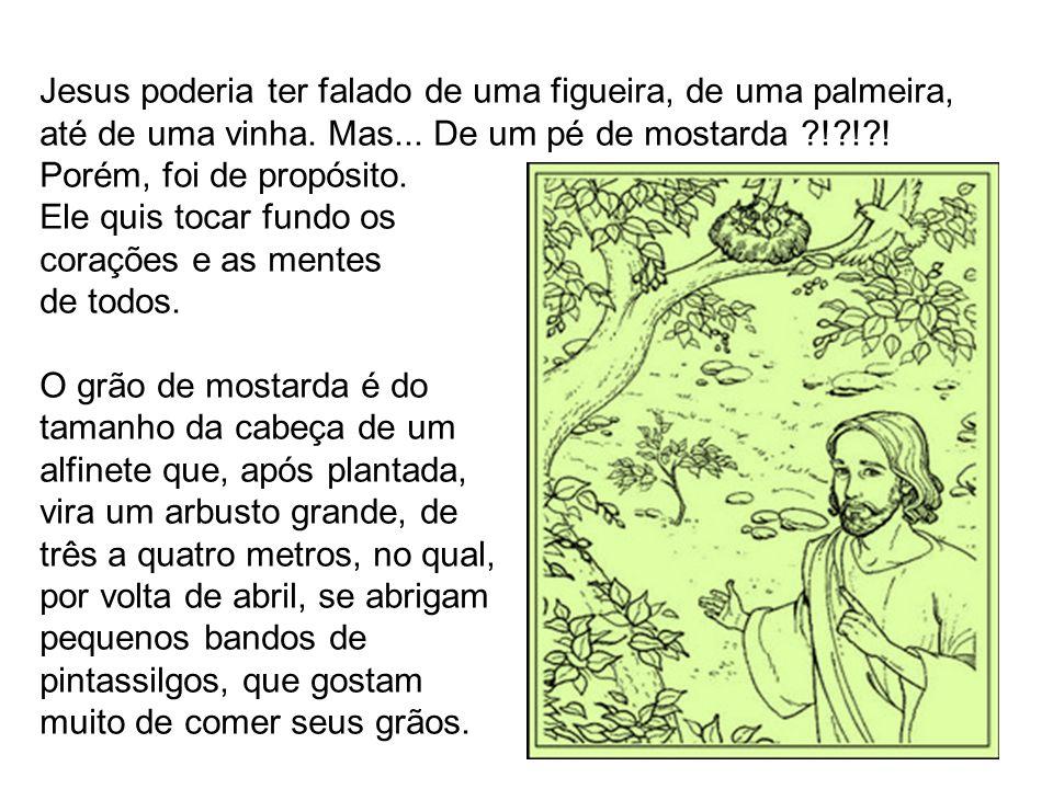 Jesus poderia ter falado de uma figueira, de uma palmeira, até de uma vinha. Mas... De um pé de mostarda ?!?!?! Porém, foi de propósito. Ele quis toca
