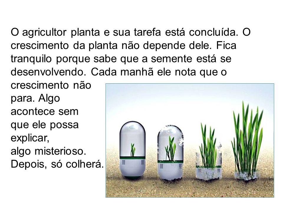 O mais importante neste mistério, não é o semeador, mas a semente e seu desenvolvimento mágico.
