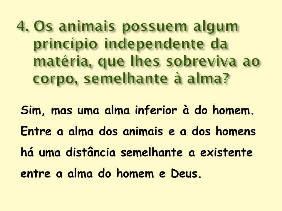Sim, mas uma alma inferior à do homem. Entre a alma dos animais e a dos homens há uma distância semelhante a existente entre a alma do homem e Deus.