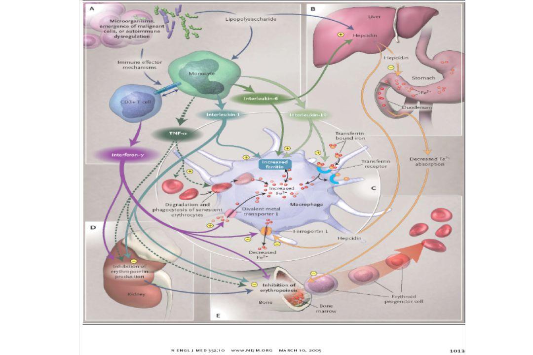 Ativação do Sistema Imune Retenção de Ferro nos Macrófagos Retenção de Ferro nos Macrófagos Liberação de Citoquinas Liberação de Citoquinas Diminuição da Hb circulante Produção Inadequada de EPO Seqüência de eventos na indução da ADC