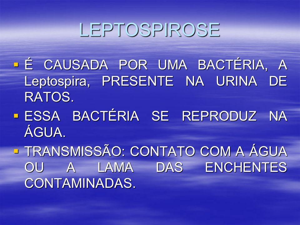 LEPTOSPIROSE É CAUSADA POR UMA BACTÉRIA, A Leptospira, PRESENTE NA URINA DE RATOS. É CAUSADA POR UMA BACTÉRIA, A Leptospira, PRESENTE NA URINA DE RATO