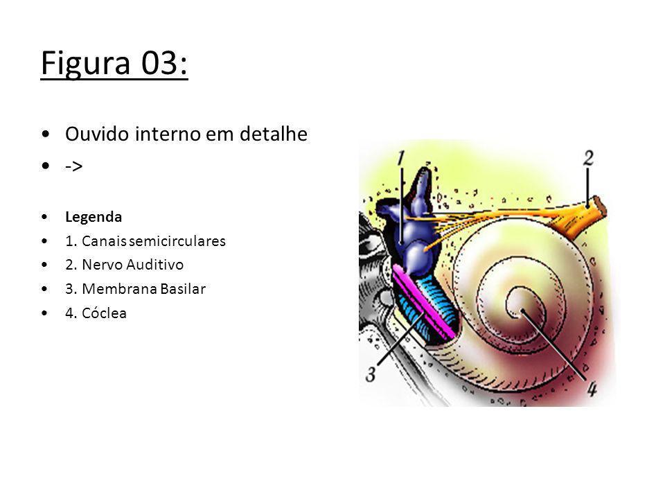 Figura 03: Ouvido interno em detalhe -> Legenda 1. Canais semicirculares 2. Nervo Auditivo 3. Membrana Basilar 4. Cóclea