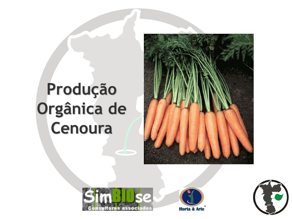 Produção Orgânica de Cenoura