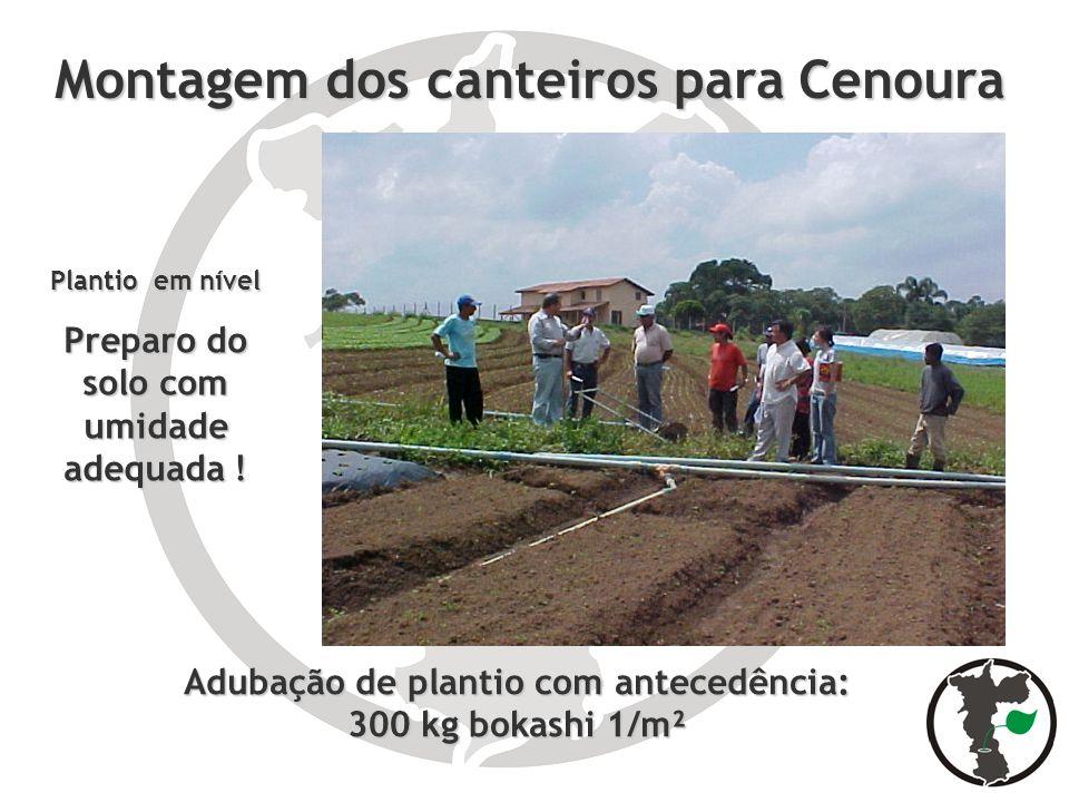 Montagem dos canteiros para Cenoura Plantio em nível Preparo do solo com umidade adequada ! Adubação de plantio com antecedência: 300 kg bokashi 1/m²