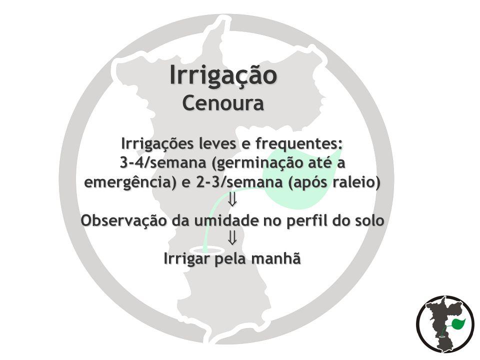 IrrigaçãoCenoura Irrigações leves e frequentes: 3-4/semana (germinação até a emergência) e 2-3/semana (após raleio) Observação da umidade no perfil do