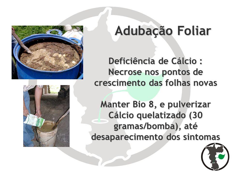 Adubação Foliar Adubação Foliar Deficiência de Cálcio : Necrose nos pontos de crescimento das folhas novas Manter Bio 8, e pulverizar Cálcio quelatiza
