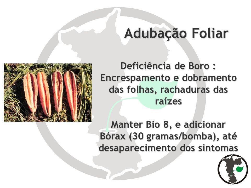 Adubação Foliar Adubação Foliar Deficiência de Boro : Encrespamento e dobramento das folhas, rachaduras das raízes Manter Bio 8, e adicionar Bórax (30