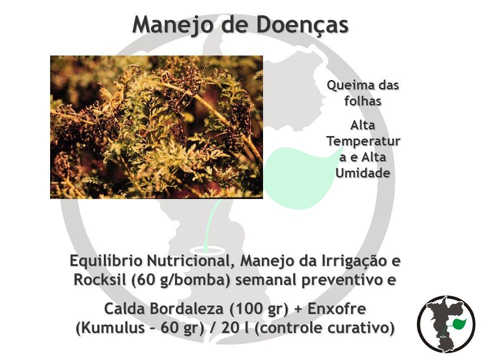 Manejo de Doenças Equilíbrio Nutricional, Manejo da Irrigação e Rocksil (60 g/bomba) semanal preventivo e Calda Bordaleza (100 gr) + Enxofre (Kumulus