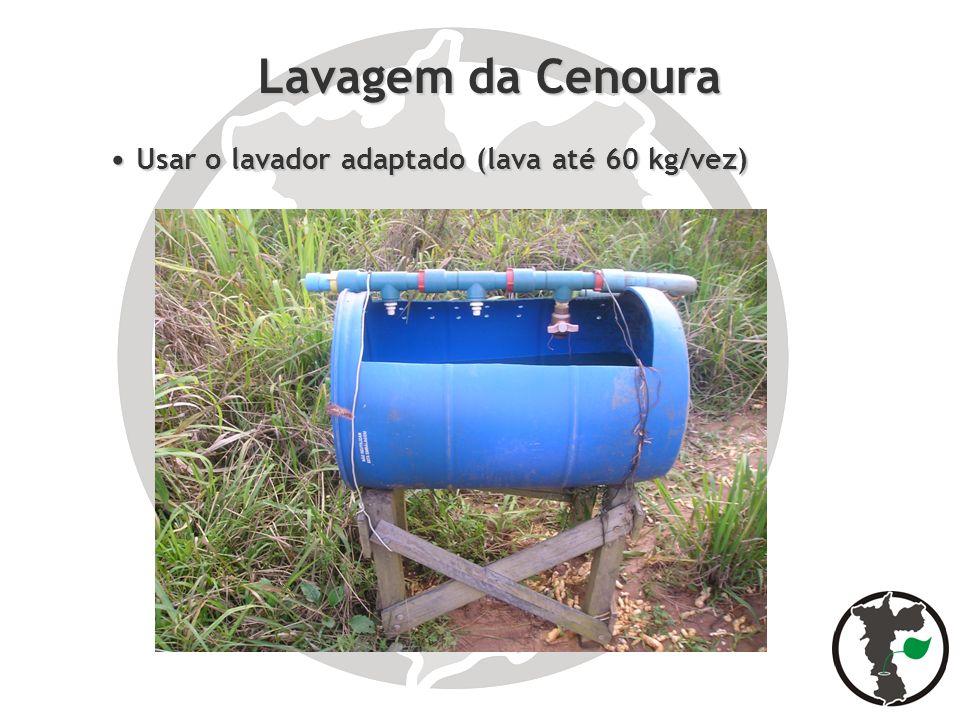 Lavagem da Cenoura Usar o lavador adaptado (lava até 60 kg/vez) Usar o lavador adaptado (lava até 60 kg/vez)
