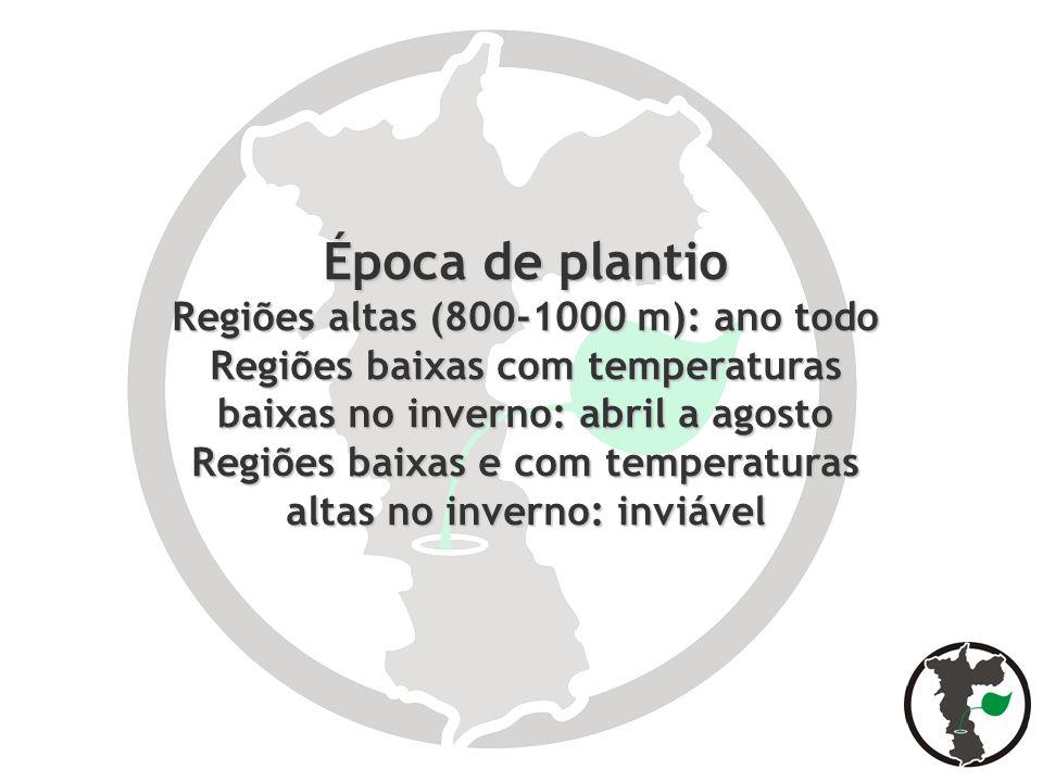 Época de plantio Regiões altas (800-1000 m): ano todo Regiões baixas com temperaturas baixas no inverno: abril a agosto Regiões baixas e com temperatu
