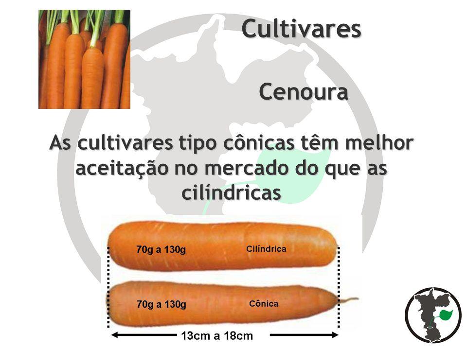 Cultivares Cenoura Cenoura As cultivares tipo cônicas têm melhor aceitação no mercado do que as cilíndricas
