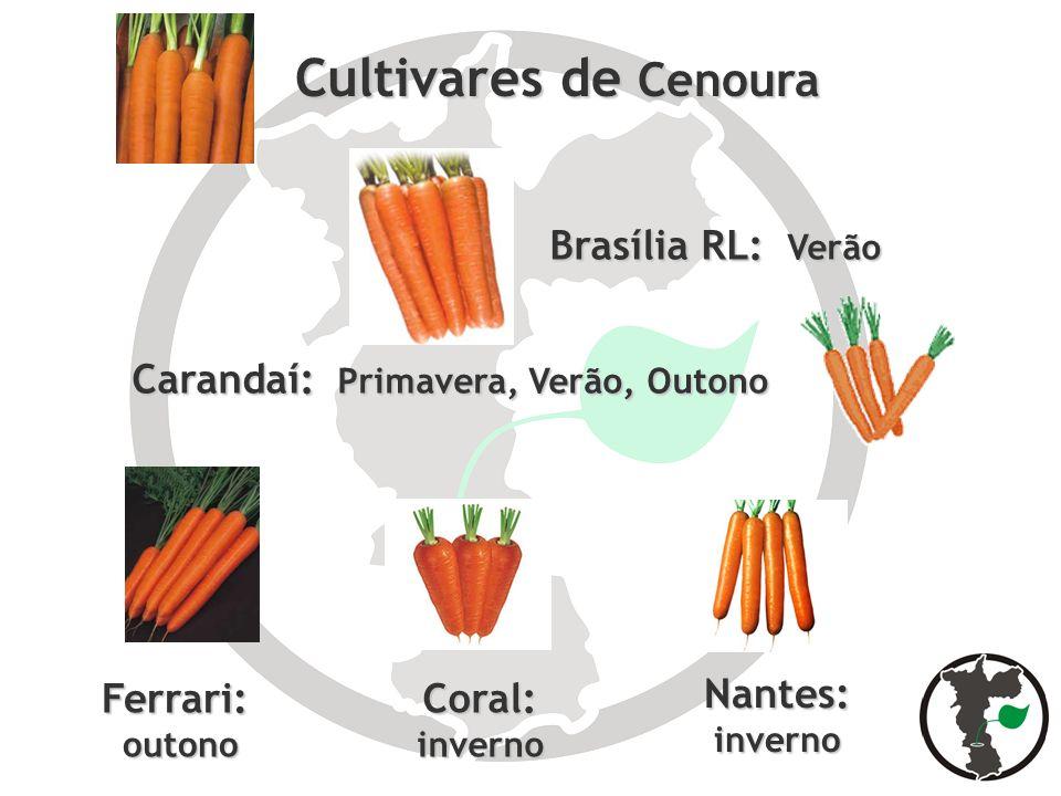 Brasília RL: Verão Coral:inverno Carandaí: Primavera, Verão, Outono Cultivares de Cenoura Cultivares de Cenoura Nantes:inverno Ferrari: outono outono